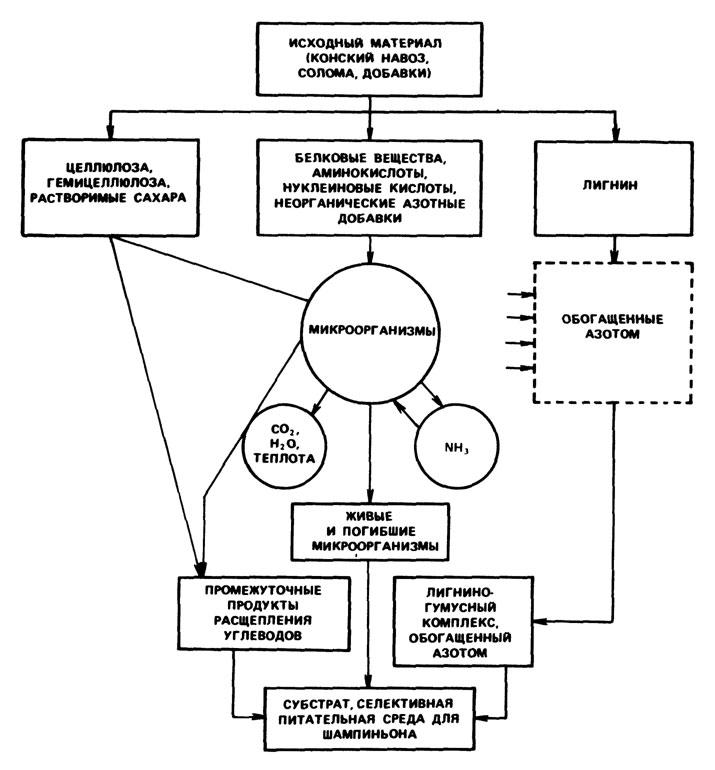 Схема микробиологической