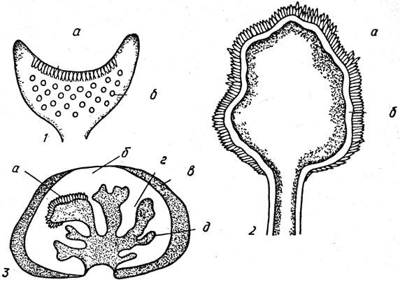 Плодовые тела сумчатых грибов